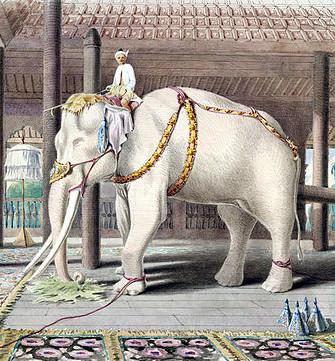 160111elephant
