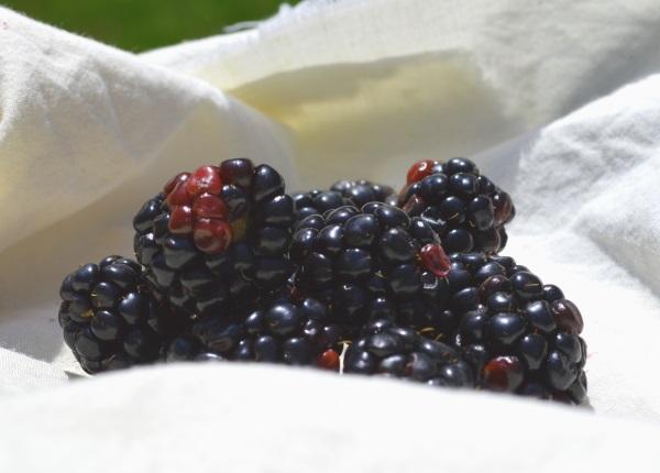 Dinner7 Berries