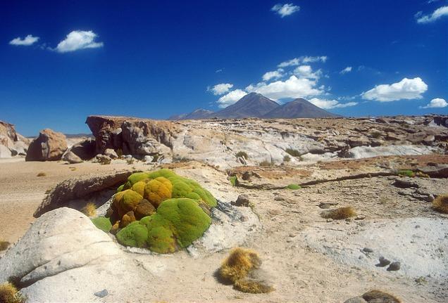 Flickr Knut-Erik Helle Yareta Bolivian Altiplano