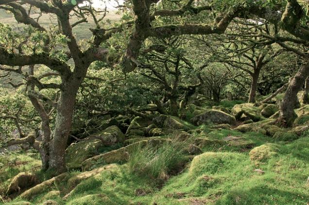 Flickr Andy Walker Wistmans Wood