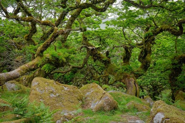 Flickr Clifton Beard Wistmans Wood