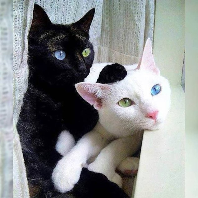 Twitter Land of Cuteness Exact Opposites Cats