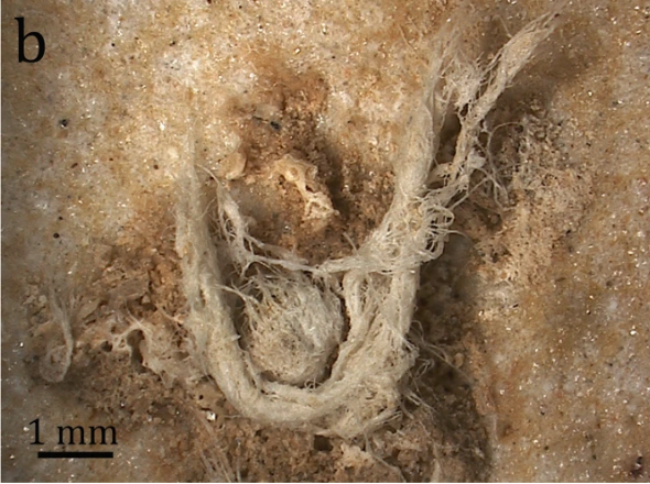 Scientific Reports Hardy et al Neanderthal Fiber