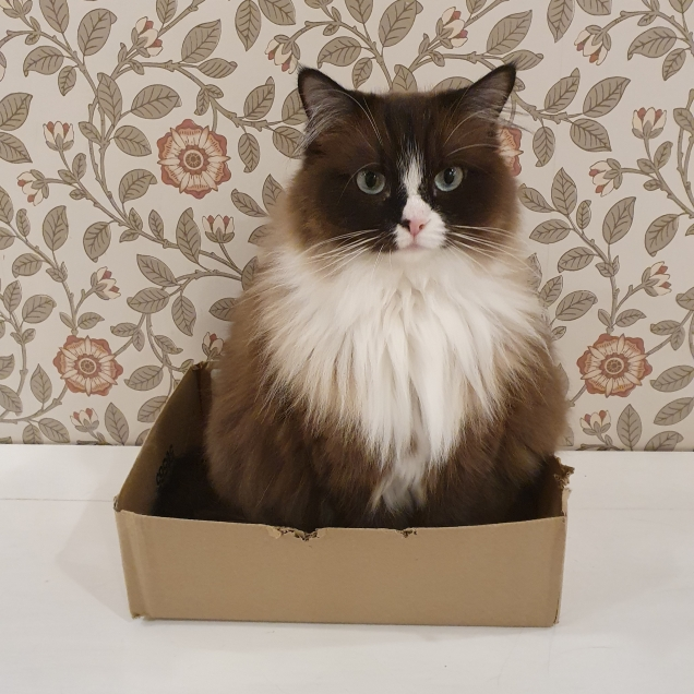 Twitter CatCafeLiverpool Cat Fits Cat Sits