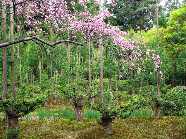 Wikipedia Bernard Gagnon Ryoan-ji Garden